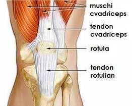 Tendinita - Ortopedie ArcaLife